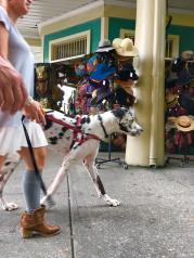 Socks, boots, big dog, hats