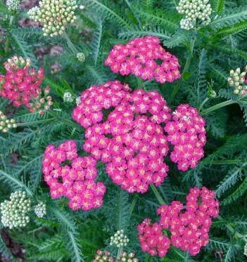 Flowers in the butterfly garden