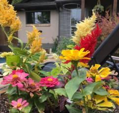 Flowers in pots in our backyard
