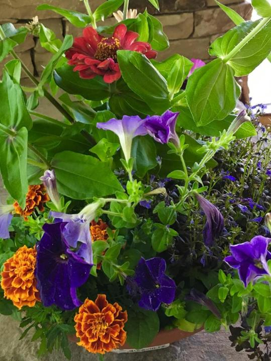 Flowers at our B&B