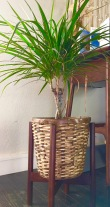 Plant stand from Mom